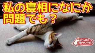 猫の変な面白寝相。またバンザイ気味で寝ています。Fascinating manner of sleeping of a cat