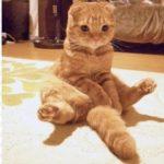 猫の肉球スイッチを触ると、可愛い姿を見せてくれた!【PECO TV】