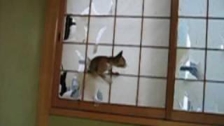 楽しく障子をやぶるネコ