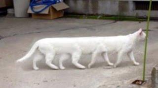 【猫 動画】猫のかわいい、おもしろ映像、子猫のかわいい、おもしろ、ハプニング動画集