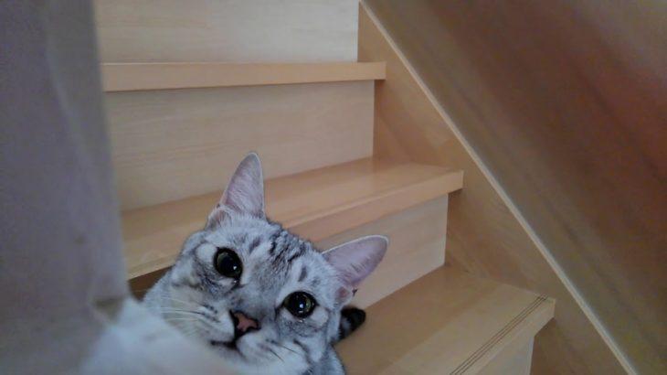 カワイイ可愛いかわいい猫パンチ