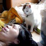 朝起こしてくるネコ