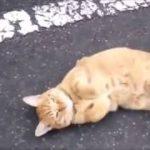 【猫・かわいい】クラクションに合わせて・・Twitterで見つけた猫さんたちの面白動画