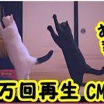 👀【猫 感動CM おもしろ】【100万回再生・感涙・優しい猫】 お婆さんと2匹の猫の物語ねこ勉〜Cats Learning〜ユーキャン CMギャラリー ・招き猫ちゃんねる
