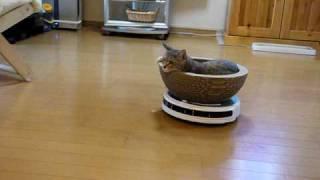 ルンバでくつろぐ猫