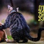 👀【感動 泣ける話 猫】ボス猫の男気・飼っている猫は地域のボス猫で子分のチビ猫の面倒を見る話!【泣ける話 感動 動物 猫】動画 里親・招き猫ちゃんねる