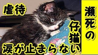 👀【感動 泣ける話 猫】全身を接着剤で塗り固めた状態 その後の姿に涙が止まらない 【感動-猫実話-虐待-涙腺崩壊】・招き猫ちゃんねる
