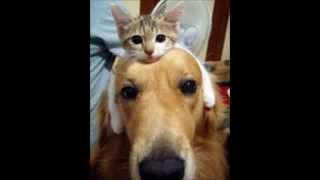 猫 ネコ ねこ! 超カワイイ動画集0010 子猫