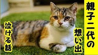 【猫 泣ける話1/1】私にとっては大切な猫との想い出・親猫と子猫2代続いたお付き合い・招き猫ちゃんねる