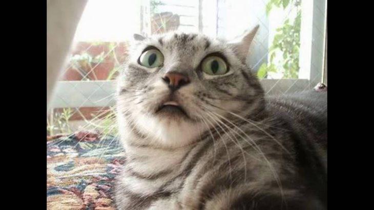 【おどろき】!! びっくりした顔の猫 Surprised cat