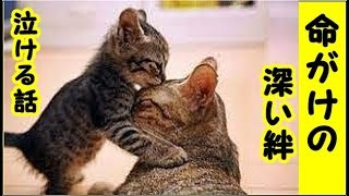 👀【感動 泣ける話】猫との絆・猫を死ぬ気で愛する面倒見るってこうゆう事なのかな・招き猫ちゃんねる