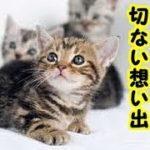 👀【猫 涙腺崩壊】障害を持った子猫の短い命・たった2週間の私と子猫の切ない想い出・招き猫ちゃんねる