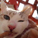 犬におやつを持ってったら猫が食らいついた!cat meow ねこ