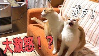 平和に猫と遊ぶはずがハプニング連発?!体当りされて大激怒!