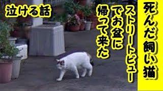👀【感動 泣ける話 猫】死んだ飼い猫グーグルストリートビューで発見! お盆に起こった「奇跡」に感動広がる【泣ける話 感動 動物 猫 google 】動画 里親・ペットロス・招き猫ちゃんねる