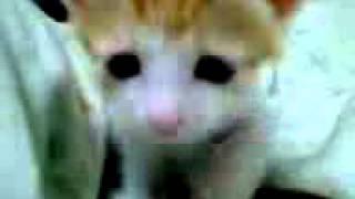 猫 ネコ ねこ! 超カワイイ動画集004 子猫