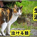 【感動 泣ける話 猫】空に流れる雲のように生きた幸せな猫の生涯【保護 泣ける話 感動 動物 猫】動画 里親・招き猫ちゃんねる】