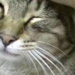 助けた猫がお礼を言いにやって来た!不思議な猫物語♥♥猫との会話を楽しむ動画 Conversation with a cat