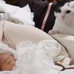 猫 赤ちゃんと初対面Cat First Meeting with Baby