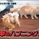 お母さん猫が大好きな子猫、母猫のズッコケにびっくり仰天!w