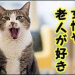 👀【猫 辛い話】猫に捨てられた話・猫は女性や老人が好き・招き猫ちゃんねる