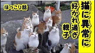 👀【猫おもしろ】猫に異常に好かれ過ぎる親子【泣ける話 感動 動物 猫】動画 里親・招き猫ちゃんねる