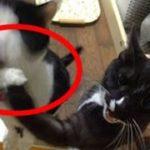 【キュン死確実!】Twitterで話題になったカワイイ猫ちゃんたちの面白シーンまとめ