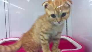 猫 ネコ ねこ! 超カワイイ動画集003 子猫