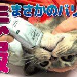 【猫ニキビ治療】病院で毛を刈られました…