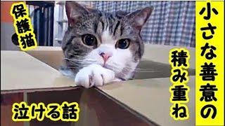 👀【保護猫 泣ける話】小さな善意 光の積み重ね・招き猫ちゃんねる