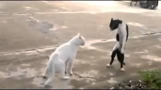 【驚愕】立って威嚇する猫【立つ猫】