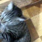 大きな音にびっくりして逃げ猫  A loud noise startled cat fled