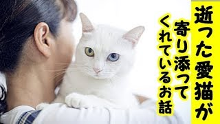 👀【感動 泣ける話】亡くなった愛猫が今でも飼い主の側に優しく寄り添っているお話 ・招き猫ちゃんねる