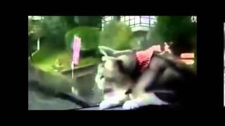 ワイパーに過剰に反応する猫♪ 【おもしろ猫動画】 YouTube Funny Cat!!