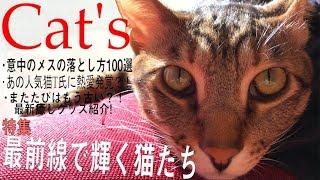 超キメ顔の猫がめっちゃ恥ずかしいハプニングで顔真っ赤にwwww