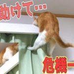 【衝撃】高いところから降りれなくなった猫の救出劇!滑り落ちそうになるハプニングも!?