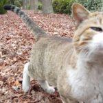 【のらねこ家族】人懐っこい白キジ野良猫ちゃん