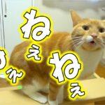 猫の甘えてる時の話し方 - the cat fawns on me –