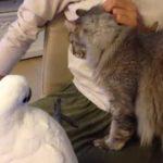 『猫に触りたいオウム』からだいたい2年(猫の名前を呼べるようになりました)