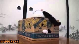 【超おもしろ猫】可笑しびっくり猫たち集
