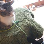 叱られた猫に救いの手を差し伸べるねこ