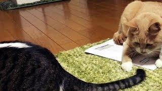 要注意!五輪に夢中になりすぎ猫撮影をおろそかにするお父ちゃん