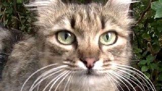 名前を呼ぶと走って来てくれる猫!外で生きる猫も家猫と同じだね 可愛い!