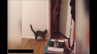 【猫びっくり】驚きのあまり飛び跳ねた猫の跳躍が凄すぎる!