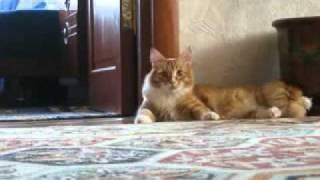 猫,びっくりしたよー!