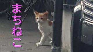 まちねこ子猫&親猫4匹同時遭遇!!子猫カワイイ!!
