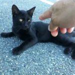 駐車場の野良猫、黒猫の子猫がかわいい