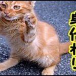 👀【猫 泣ける話】猫の身代わりなんかいらんよ!皆全員大切な家族なんだ・招き猫ちゃんねる