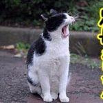 👀【猫の足長おじさん】感動・猫の親子の面倒を見ているブチ猫の話・招き猫ちゃんねる