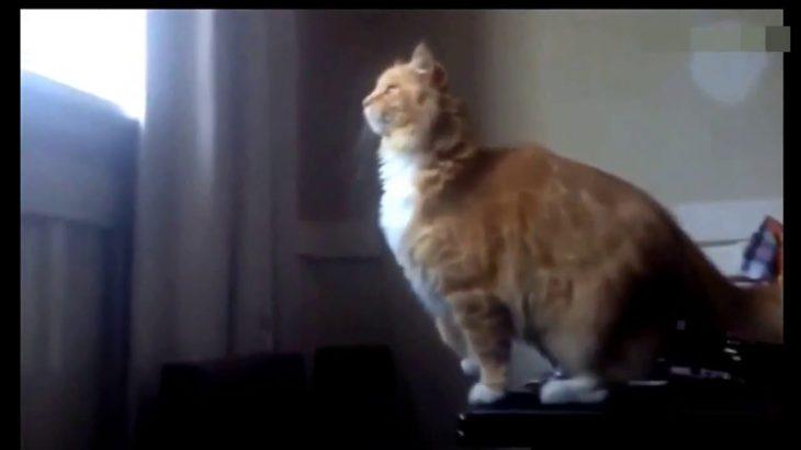 【超おもしろ猫】おもしろ可笑しドジ猫ハプニング集